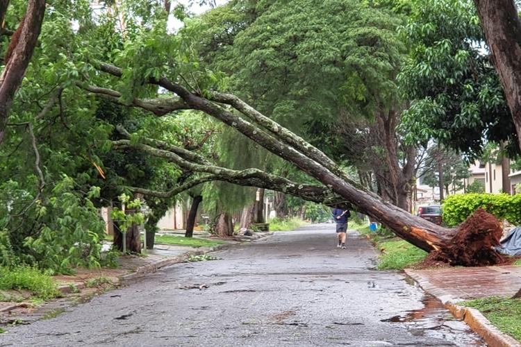 Árvore caiu durante temporal. Foto: Juan Diego/Redes sociais/Gazeta do Dia