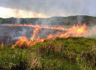 Incêndio em MS. Foto: Corpo de Bombeiros/Divulgação