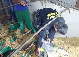 Maconha estava escondida em carga de milho. Foto: Reprodução