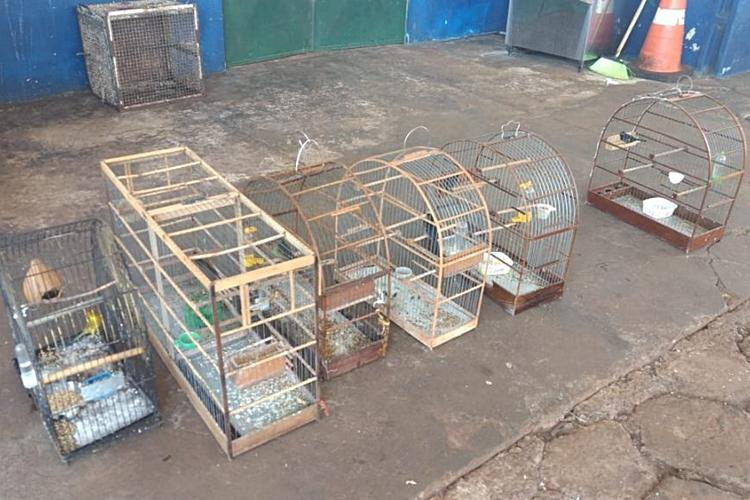 Pássaros apreendidos. Foto: Divulgação