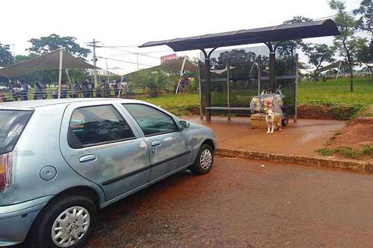 Pitbull estava em ponto de ônibus. Foto: PM/Divulgação