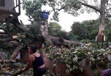 Árvore caída durante temporal. Foto: RB em Tempo Real/Reprodução
