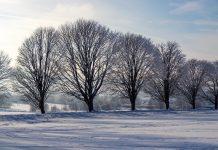 Neve nos Estados Unidos. Foto: Pixabay