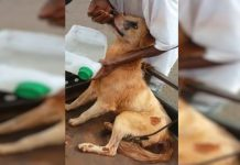 Cão foi socorrido. Foto: Polícia Militar/Divulgação