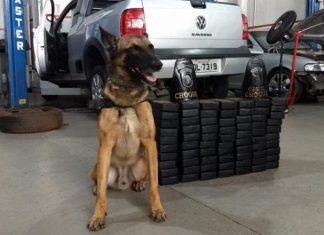 Policial foi preso com cocaína. Foto: Divulgação