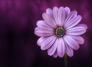 Flor. Foto: Pixabay