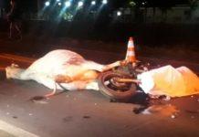 Motociclista e animal morreram no local do acidente. Foto: Campo Grande News/Reprodução