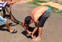 Homens vão responder por maus-tratos a animais após matarem sucuri. Foto: Reprodução