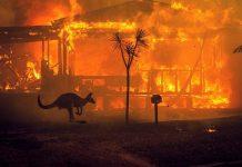 Mais de 500 milhões de animais morrem em incêndios na Austrália. Foto: Reprodução
