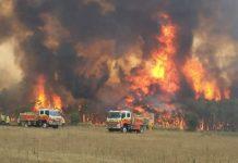 Incêndio na Austrália. Foto: FRNSW
