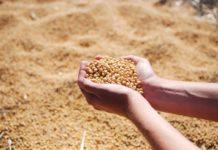 Mato Grosso do Sul é atualmente o sexto Estado do país que mais exporta soja. Foto: Pixabay