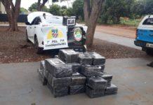 Polícia apreende 573 kg de maconha em Deodápolis. Foto: Divulgação