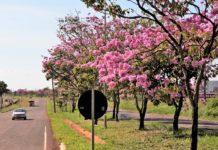 Campo Grande. Foto: Site oficial da prefeitura de Campo Grande (MS)