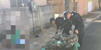 Droga estava entre os abacaxis. Foto: Divulgação