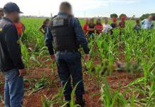 Homem é encontrado morto em milharal em Dourados. Foto: Sidnei Bronka/Ligado na Notícia/Reprodução