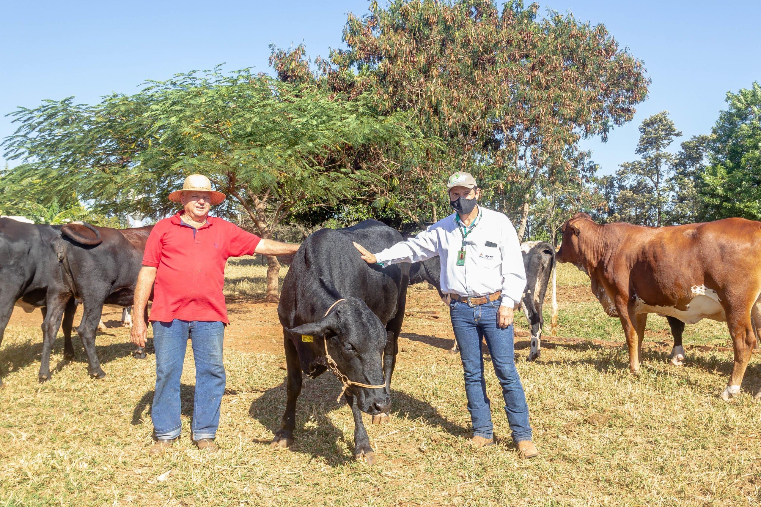Cristian Felippi, da Agraer e Francisco Rigatto com os animais vindos de Minas Gerais. Foto: Rafael Henrique/Gazeta do Dia