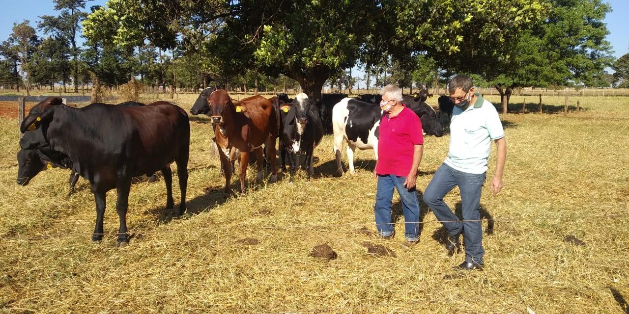 João Carlos, da Agraer acompanhando a chegada dos animais na propriedade do Rigatto. Foto: Divulgação