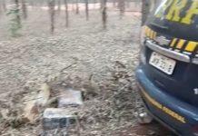 Grande quantidade de maconha estava abandonada em uma propriedade rural. Foto: Divulgação