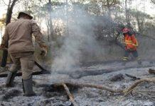 Estão suspensas todas as autorizações de 'queima controlada' no Pantanal. Foto: Chico Ribeiro/Divulgação