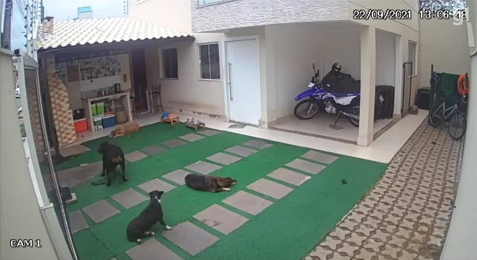 Dois cachorros morrerem no ataque. Foto: Reprodução